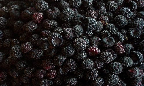 Ashleigh & Burwood Black Raspberry