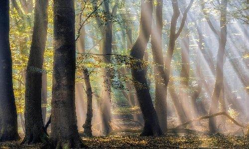Ashleigh & Burwood Enchanted Forest