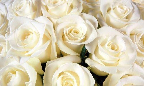 Ashleigh & Burwood Rose White Oud