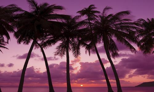 Village Candle Palm Beach