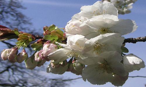 Woodwick Terrace Blossoms Trilogy