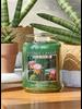 Village Candle Village Candle Cactus Flower Medium Jar