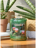 Village Candle Village Candle Cactus Flower Small Jar
