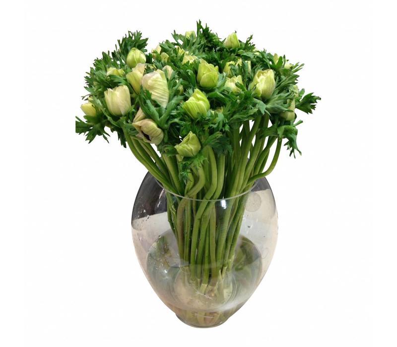10 Anemonen Galil Weiß