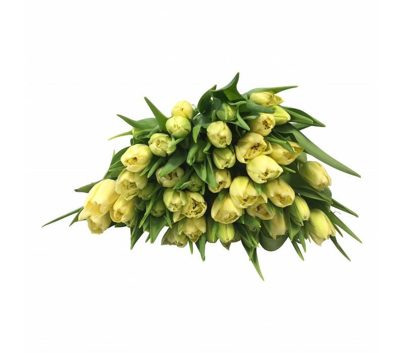 10 Tulpen Verona (Gefüllt)