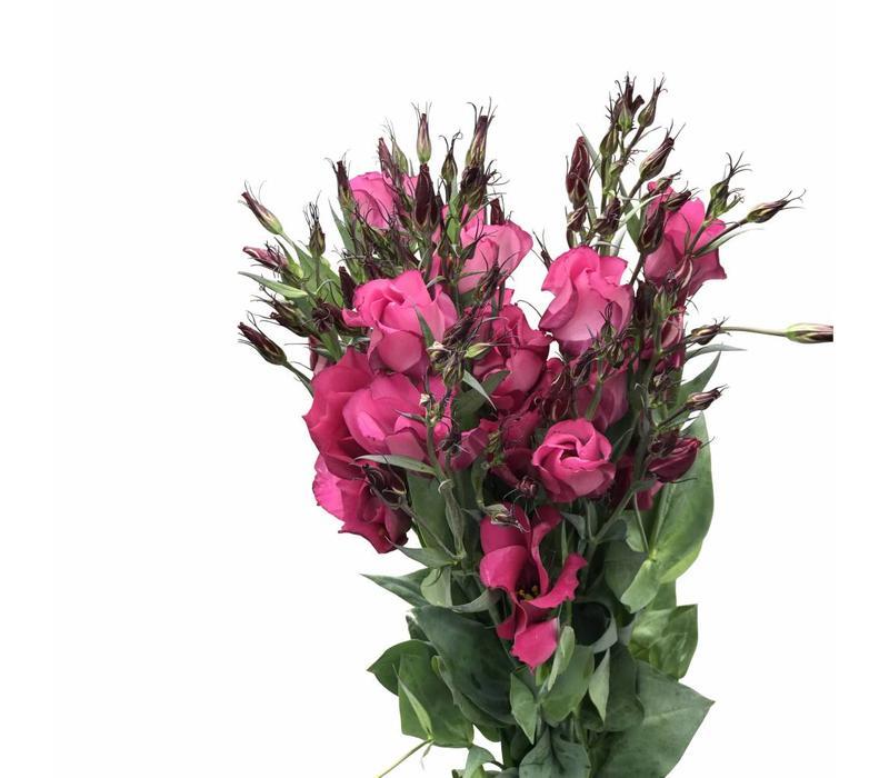 10 Eustoma Adom (Pink)