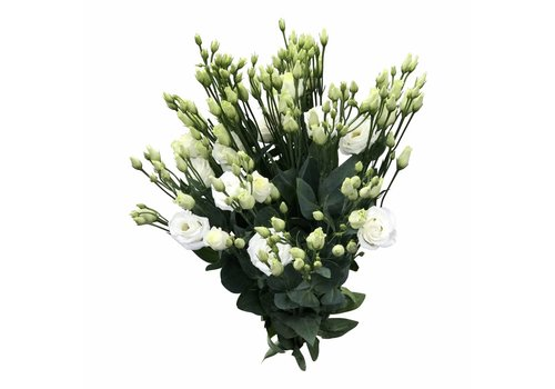 10 Eustoma Rosi White (Weiß)