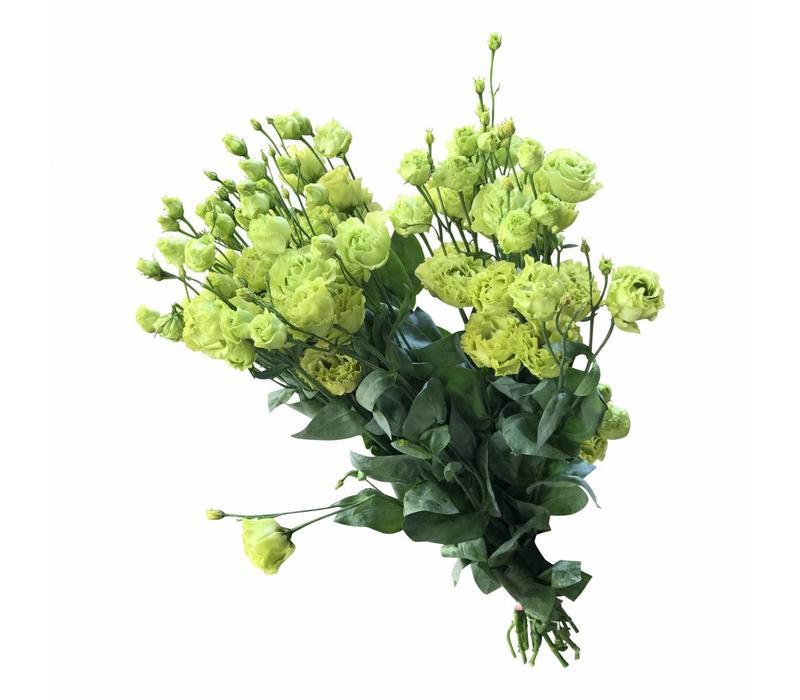 10 Eustoma Alissa Green (Grün)