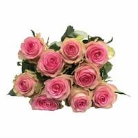 10 Premium-Rosen Brigitte Bardot (Rosa)