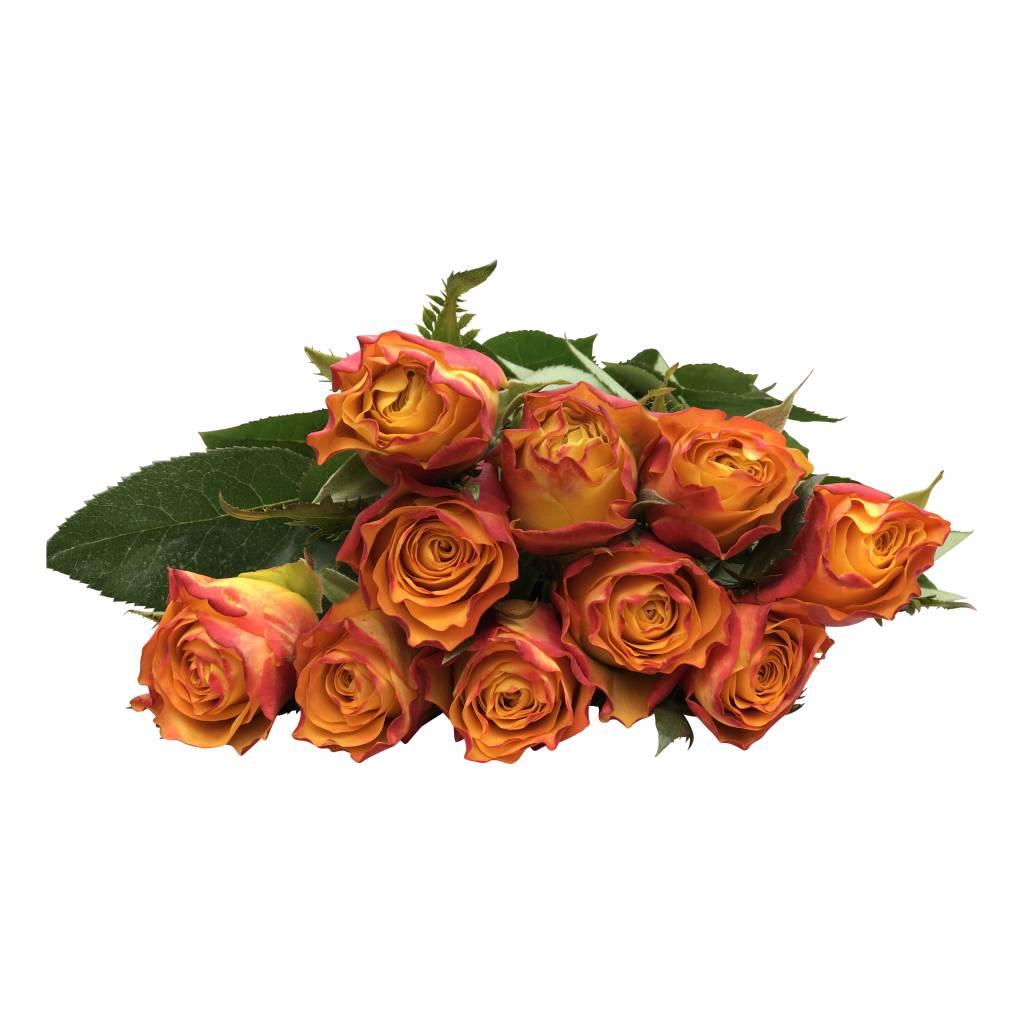 orange rosen downtown bestellen auf bezahlbare. Black Bedroom Furniture Sets. Home Design Ideas
