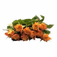 10 Premium Marie Claire (Orange)