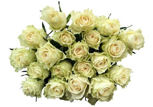 100 Rosen Creme-Weiß Solsy