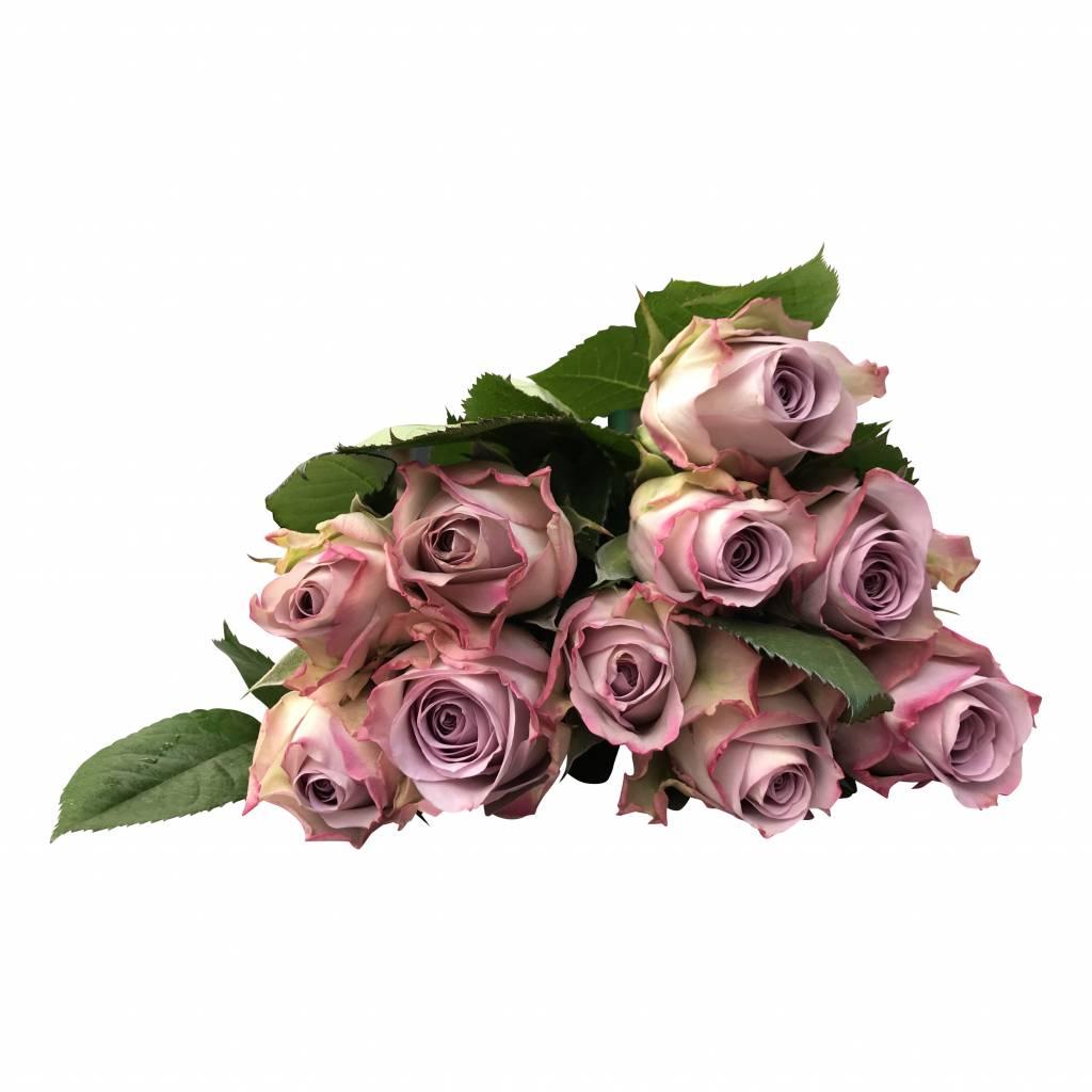 Rosen Memory-Lane online bestellen bei bezahlbare-Blumen.de