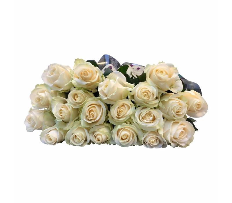 10 Premium-Rosen Four Seasons (Champagner)