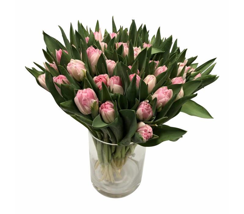 10 Tulpen Foxtrot Gefüllt (Hell-Rosa)