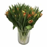 10 Gefüllte Tulpen Viking (Rot Orange)