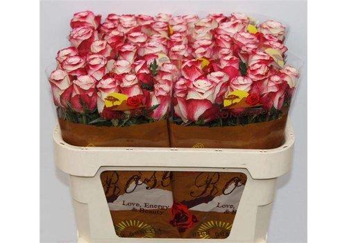 10 Premium-Rosen Adv. Sweetness