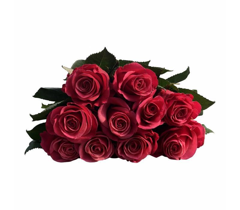10 Rosen Tacazzi+ (Pink)