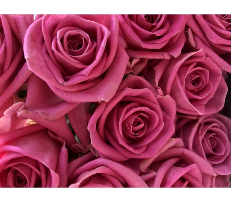 10 Premium-Rosen Aqua (Pink)