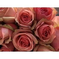 10 Rosen Donnatella  (Hell Rosa)