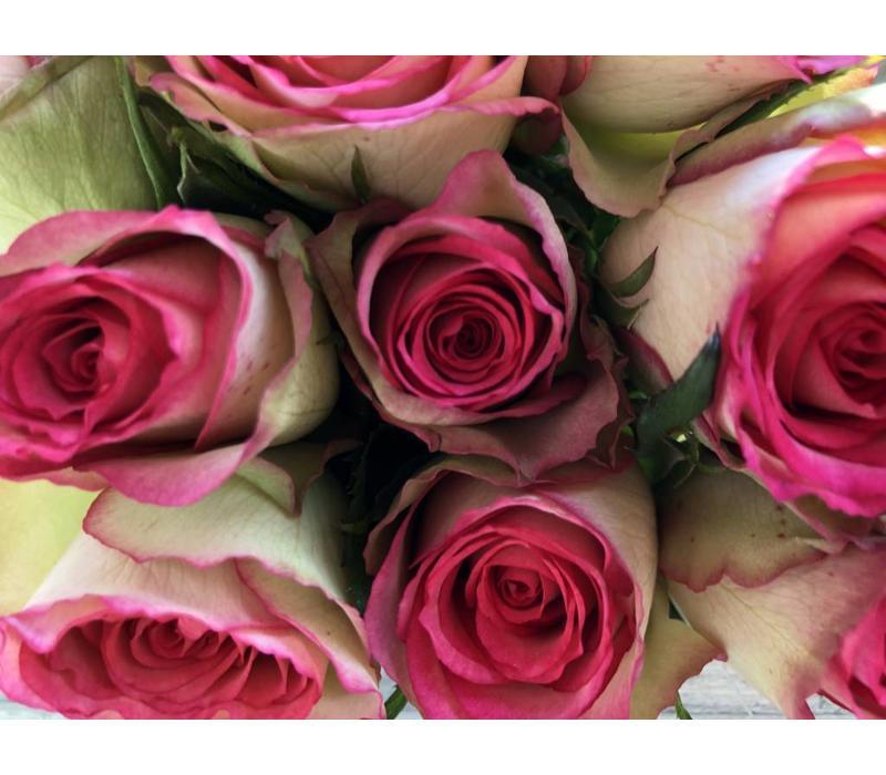 10 Rosen Glow (Creme Pink)