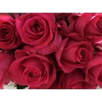 10 Premium-Rosen Ivy+ (Pink)