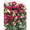 10 Eustoma Rosi Red