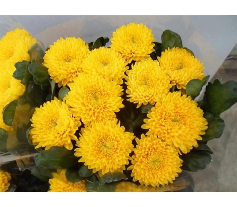 10 Deko Chrysanthemen  Migoli (Gelb)