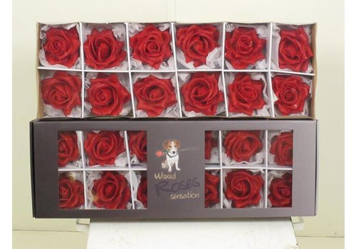 12 Wachsrosen Sensations im Karton (Rot)