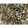 1 Bund Eukalyptus Globulus  400 Gramm