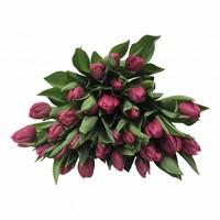 10 Tulpen Queen of Marve
