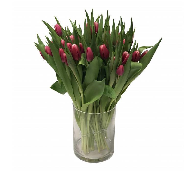10 Tulpen Debutante