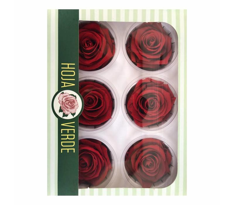 6 Konservierte Rosen Rot