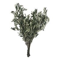 1 Bund Olive
