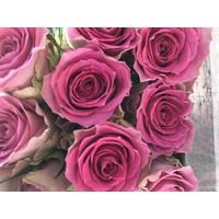 100 Rosen Times Square (Rosa)