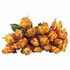 100 Rosen Gelb-Orange Newsflash