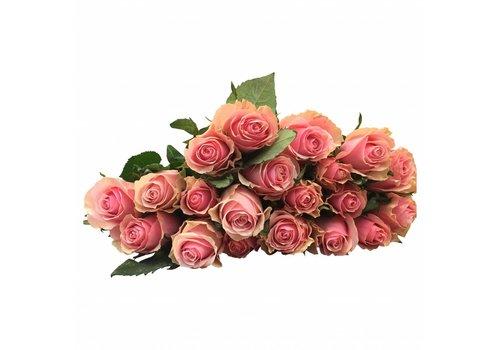 100 Rosen Rosa Celeb