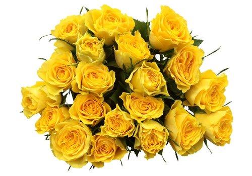 100 Rosen Gelb Solero