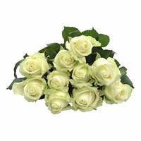 100 Rosen Avalanche