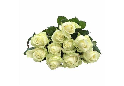 100 Premium-Rosen Weiß Avalanche