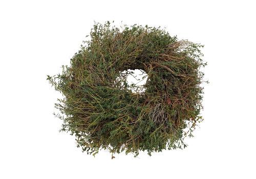 Zierkranz Euphorbia Spinosa