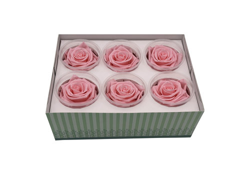 6 Konservierte Rosen Light Pink