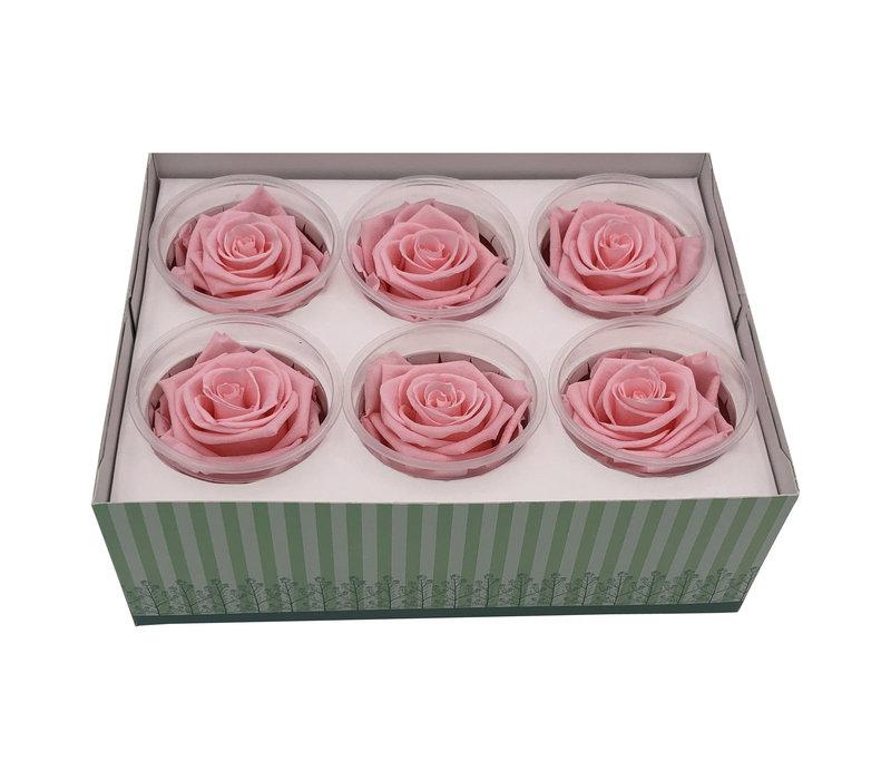 6 Konservierte Rosen Light Pink