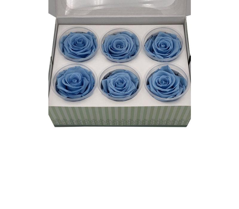 6 Konservierte Rosen Blue