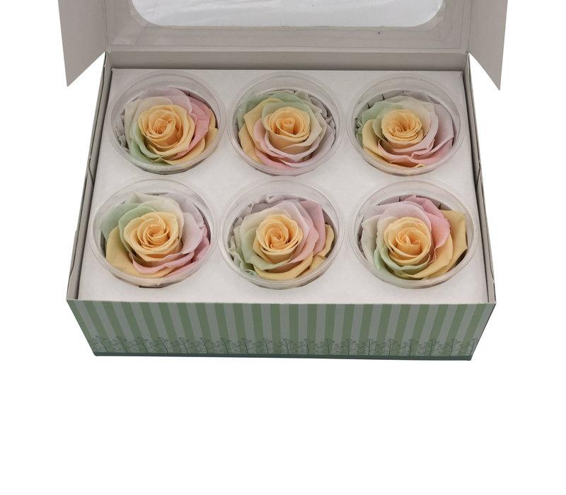 6 Konservierte Rosen Pastel