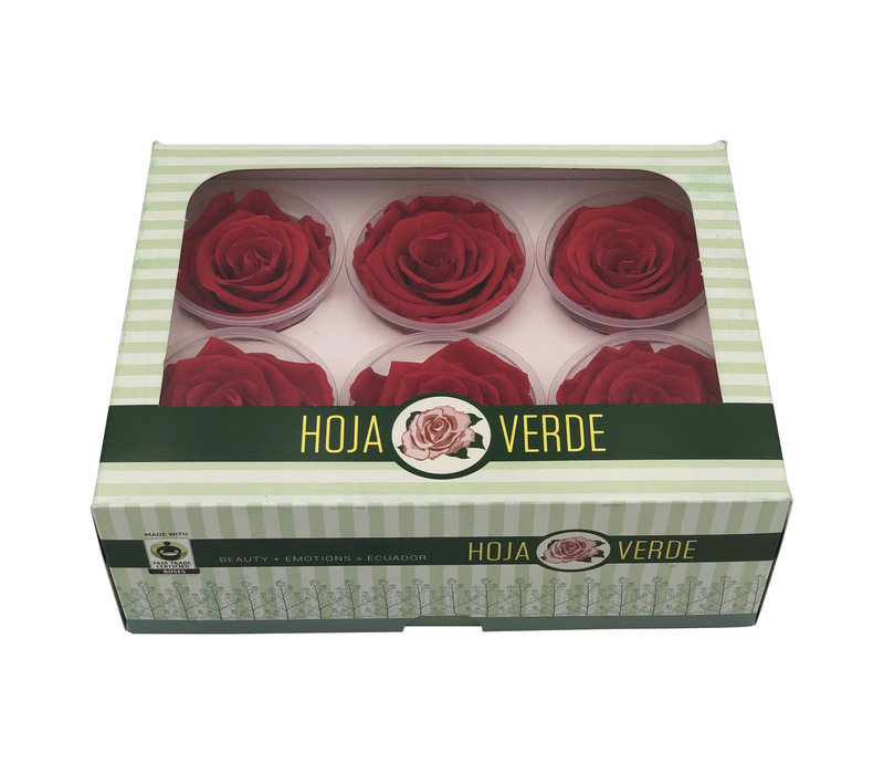 6 Konservierte Rosen Light Red