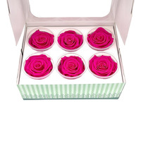 6 Konservierte Rosen Fuchsia