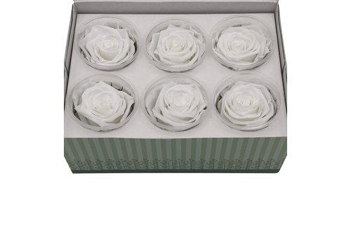 6 Konservierte Rosen Weiß