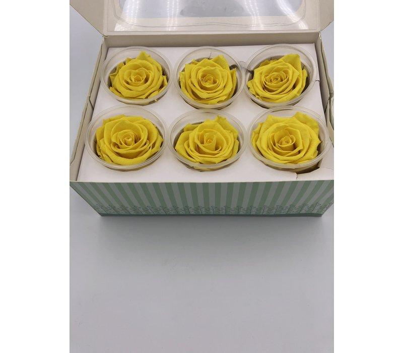 6 Konservierte Rosen Yellow
