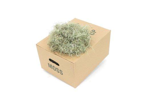 1 Kiste Tillandsia Moos Fein